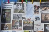 Волгодонцы помогли бездомным животным и пообщались с питомцами «Делай добро»