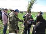 Общественники Волгодонска снова проведут посадки на берегу залива. А толку?